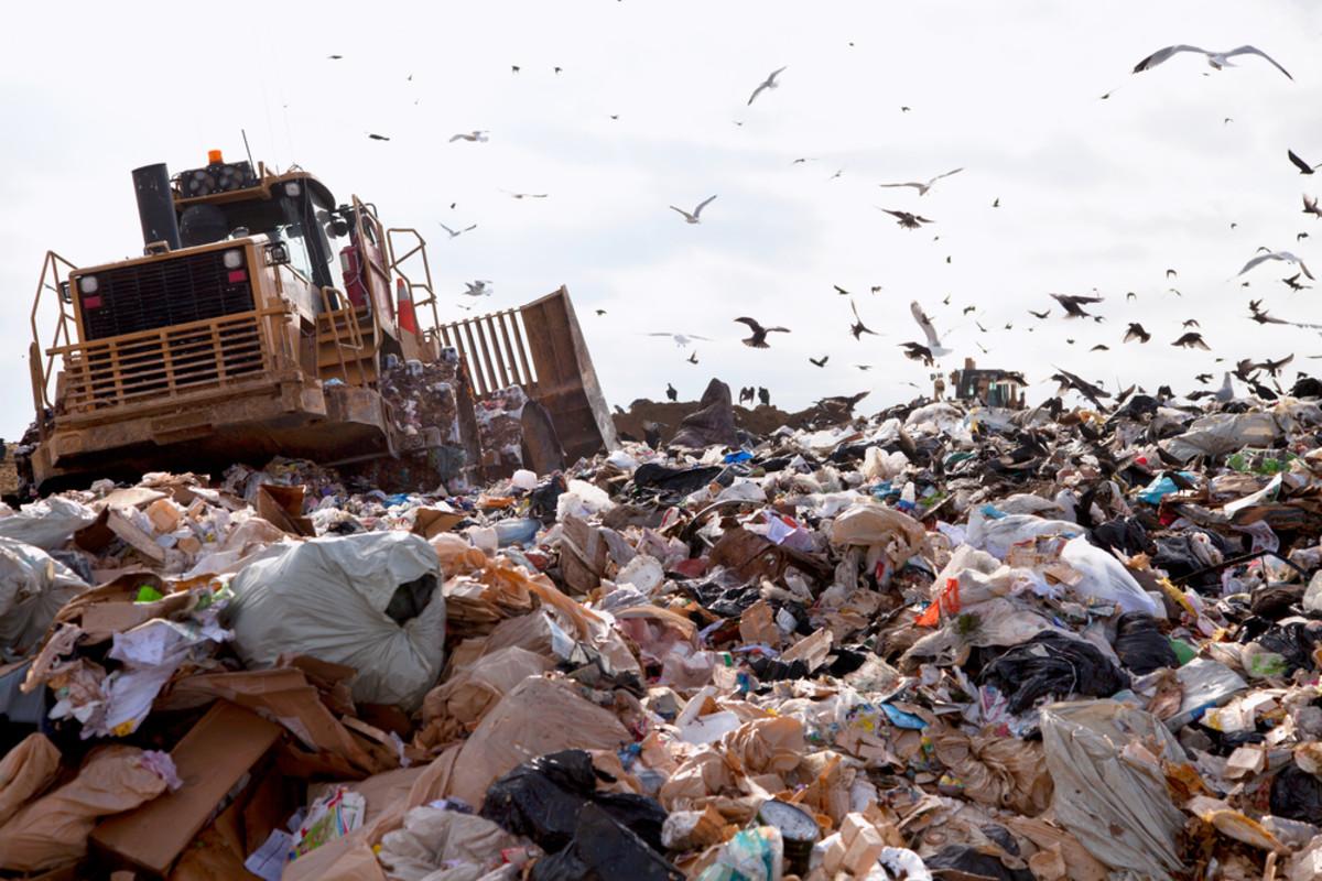 food waste ends up in landfills