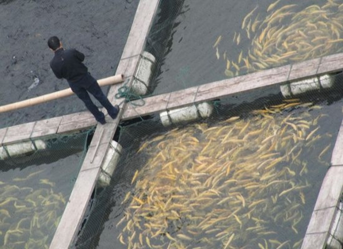 fish farms are destructive on the environment