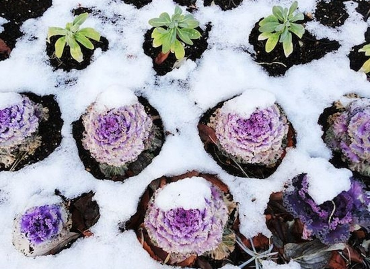 winter-garden-ccflcr-foody.chen_