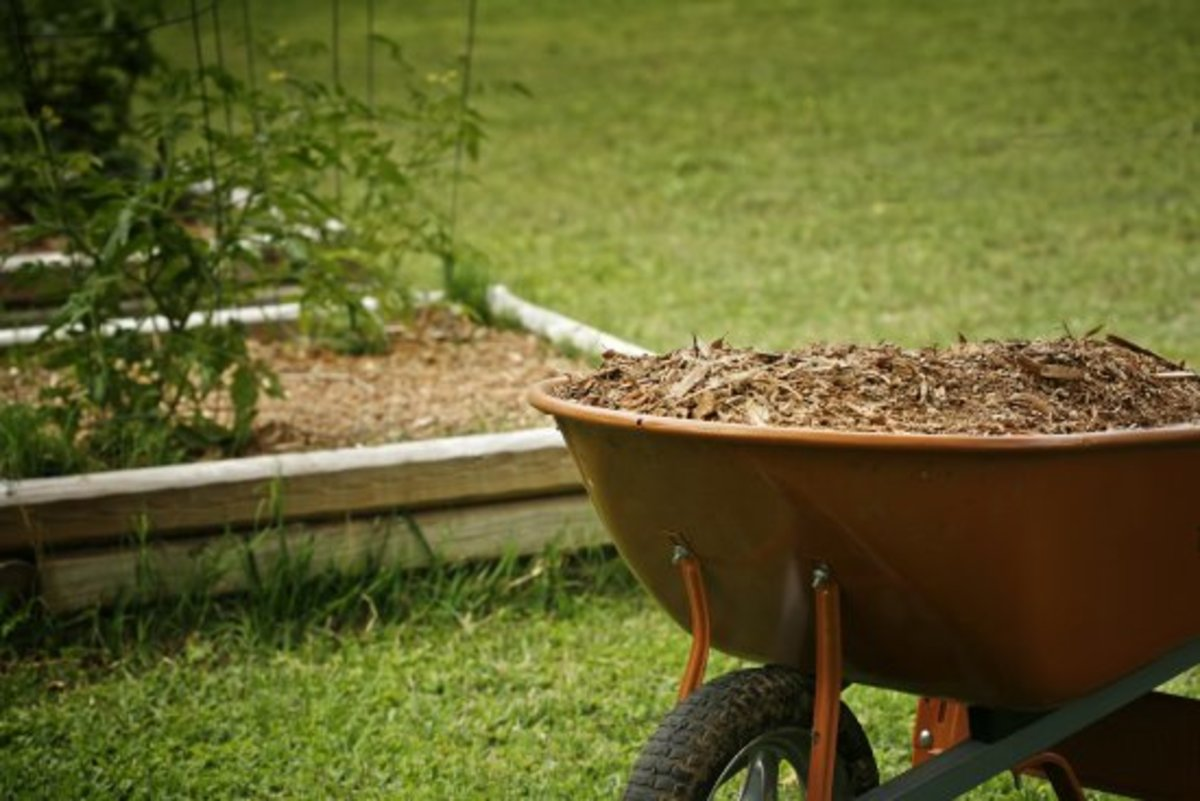 15 Things About Garden Mulch You Need To Know Yes Really