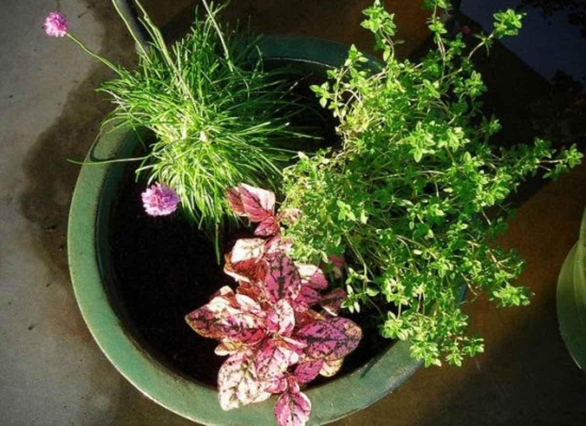3-Radical-Ways-to-Grow-Veggies-Indoors_ccflcr_NEW_-peregrine-blue_10.02.12