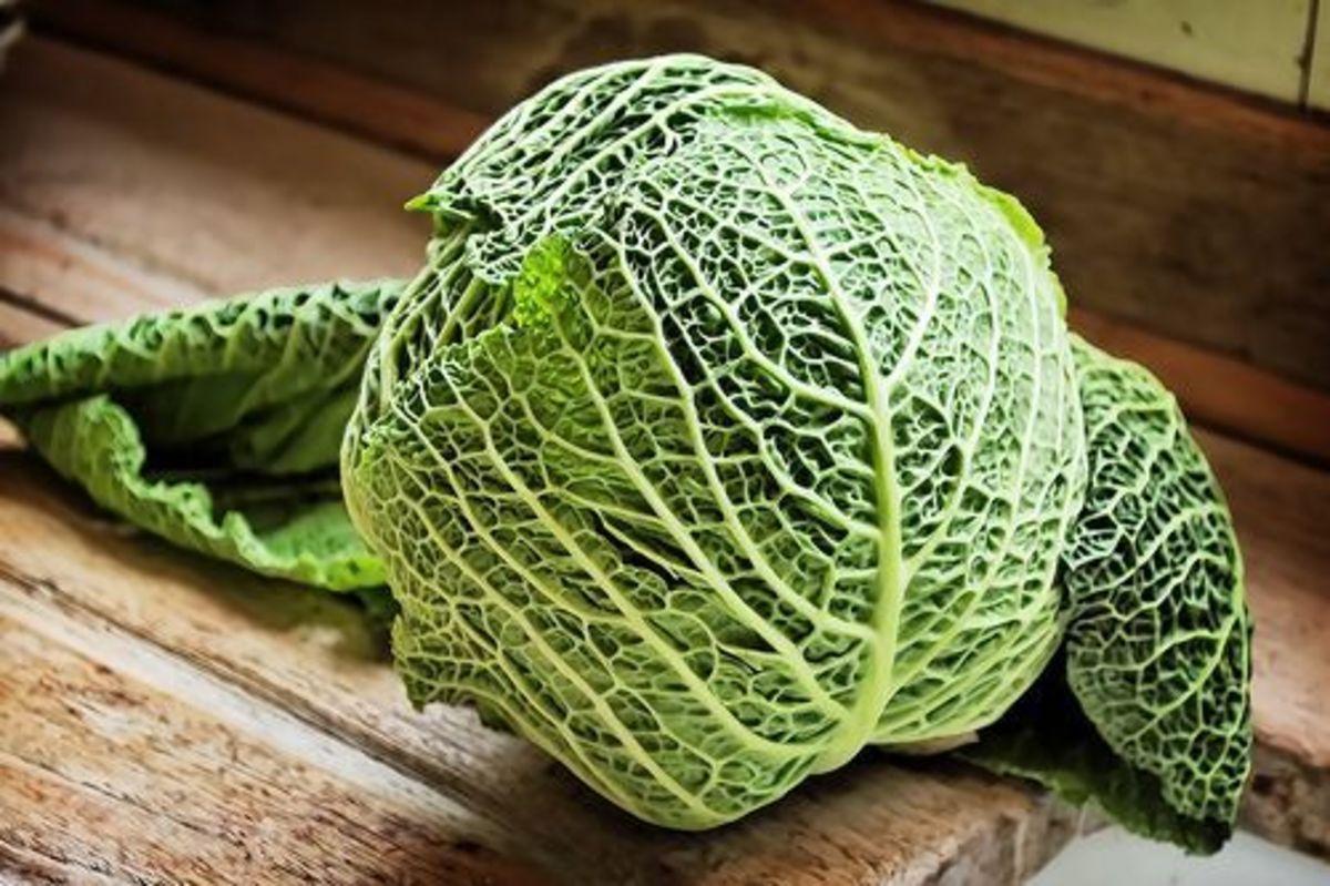 cabbage-ccflcr-alexbrn