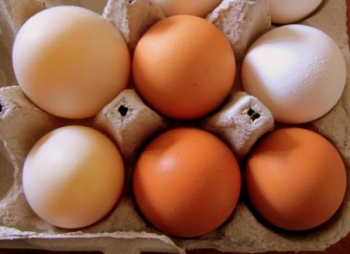 egg-ccflcr-amyross