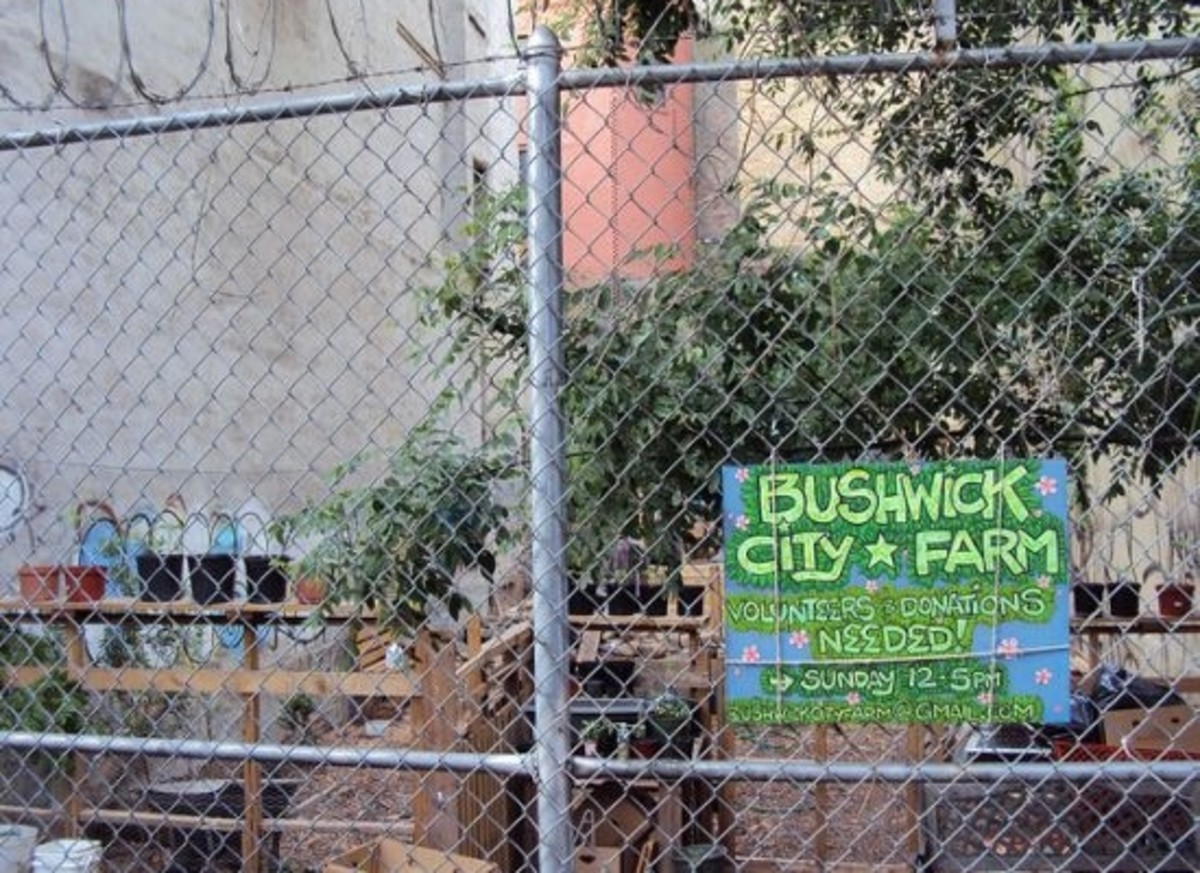 urban farms are showing no sign of slowing down