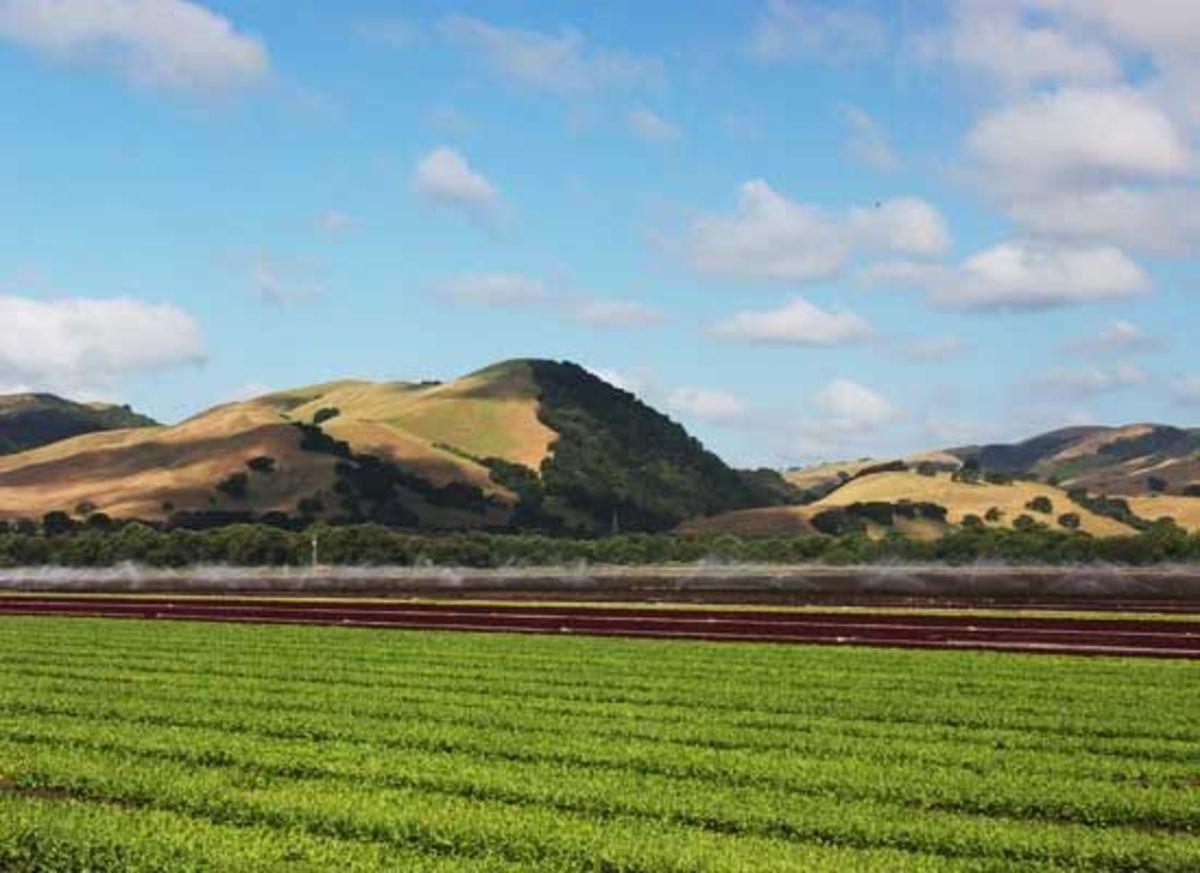 Field-Earthbound-Farm