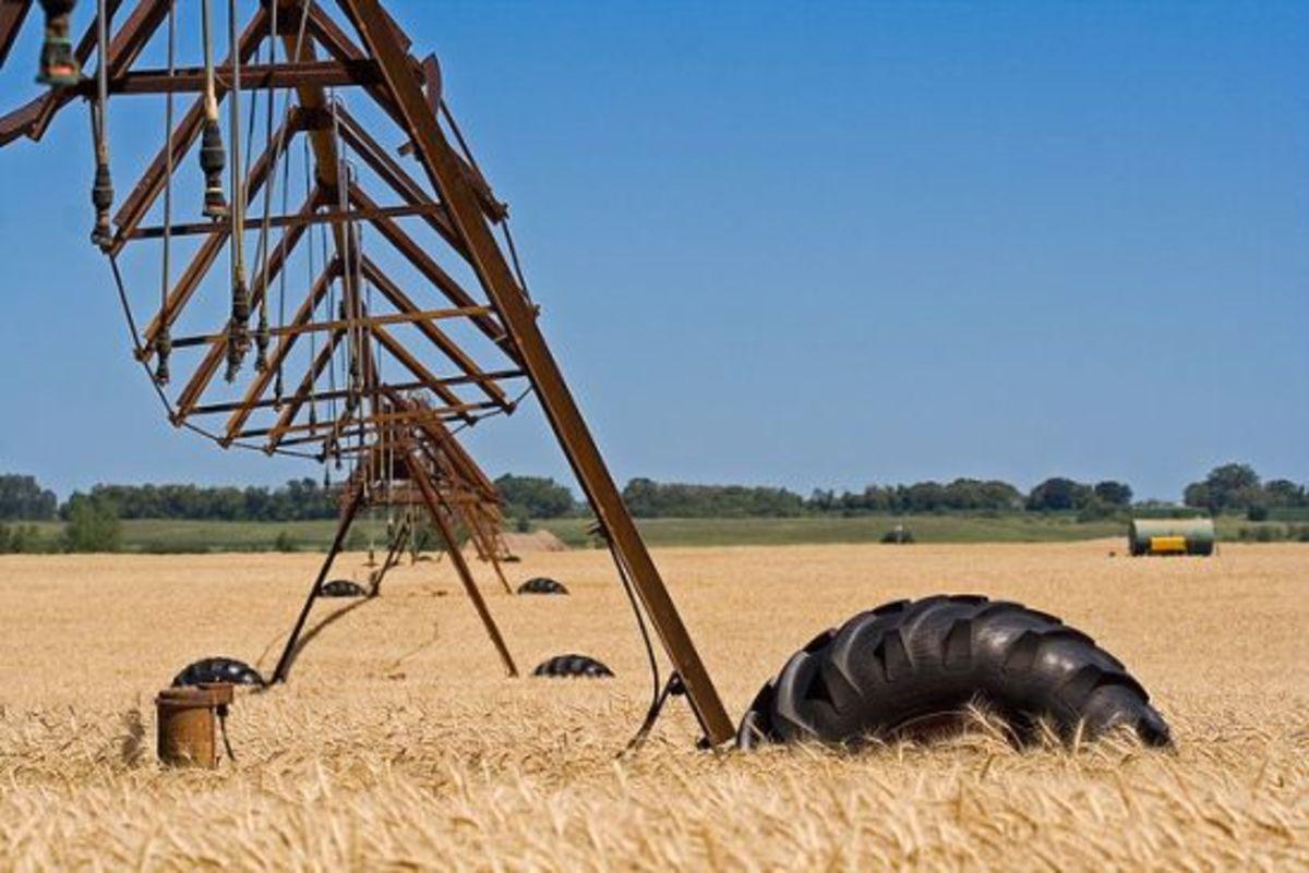 wheatfarm-ccflcr-UnhinderedbyTalent1