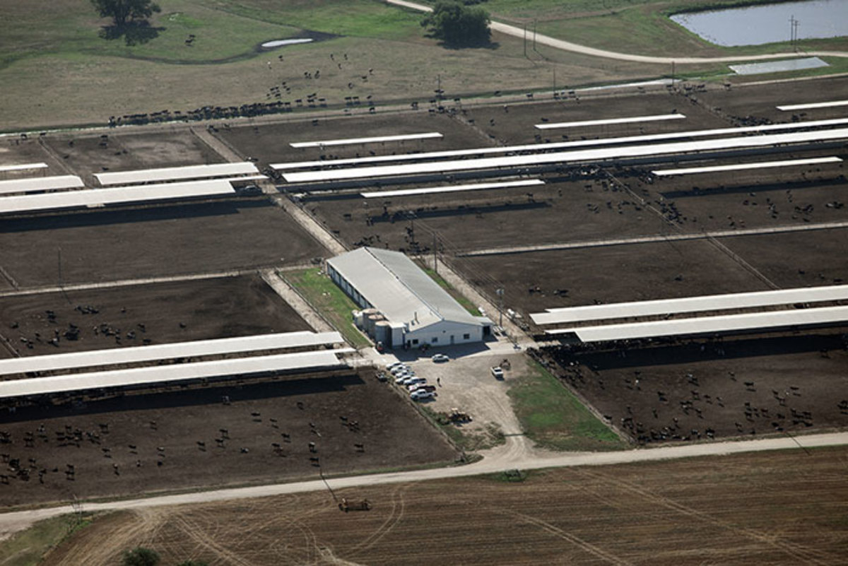 Organic Milk and Egg Producers Accused of 'Factory Farm' Conditions that Violate Organic Law