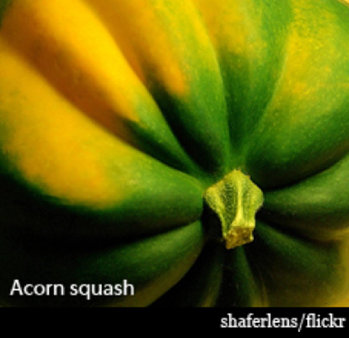 acornsquash-shaferlens3
