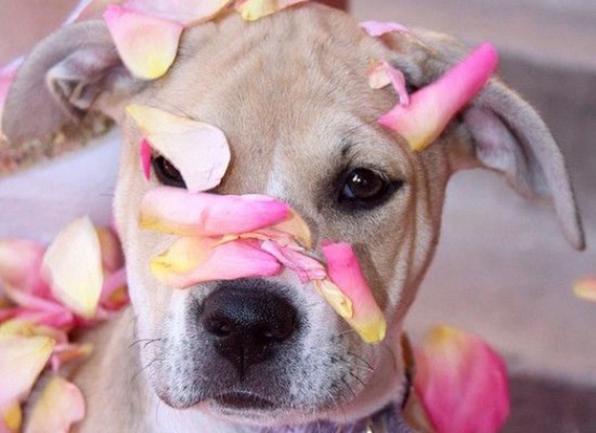 dog-ccflcr-pinksherbetphotography