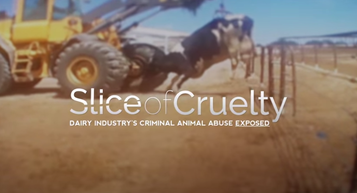 slice of cruelty