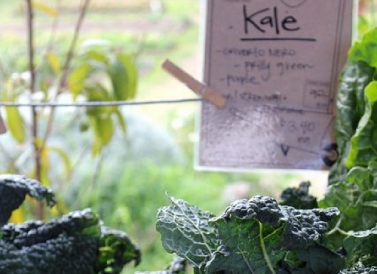 kale-ccflcr-various-brennemans