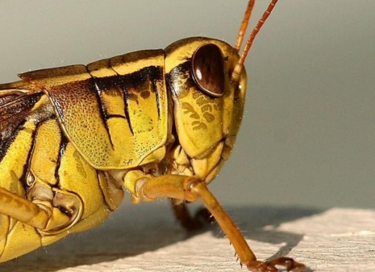 grasshopper-ccflcr-lidarose