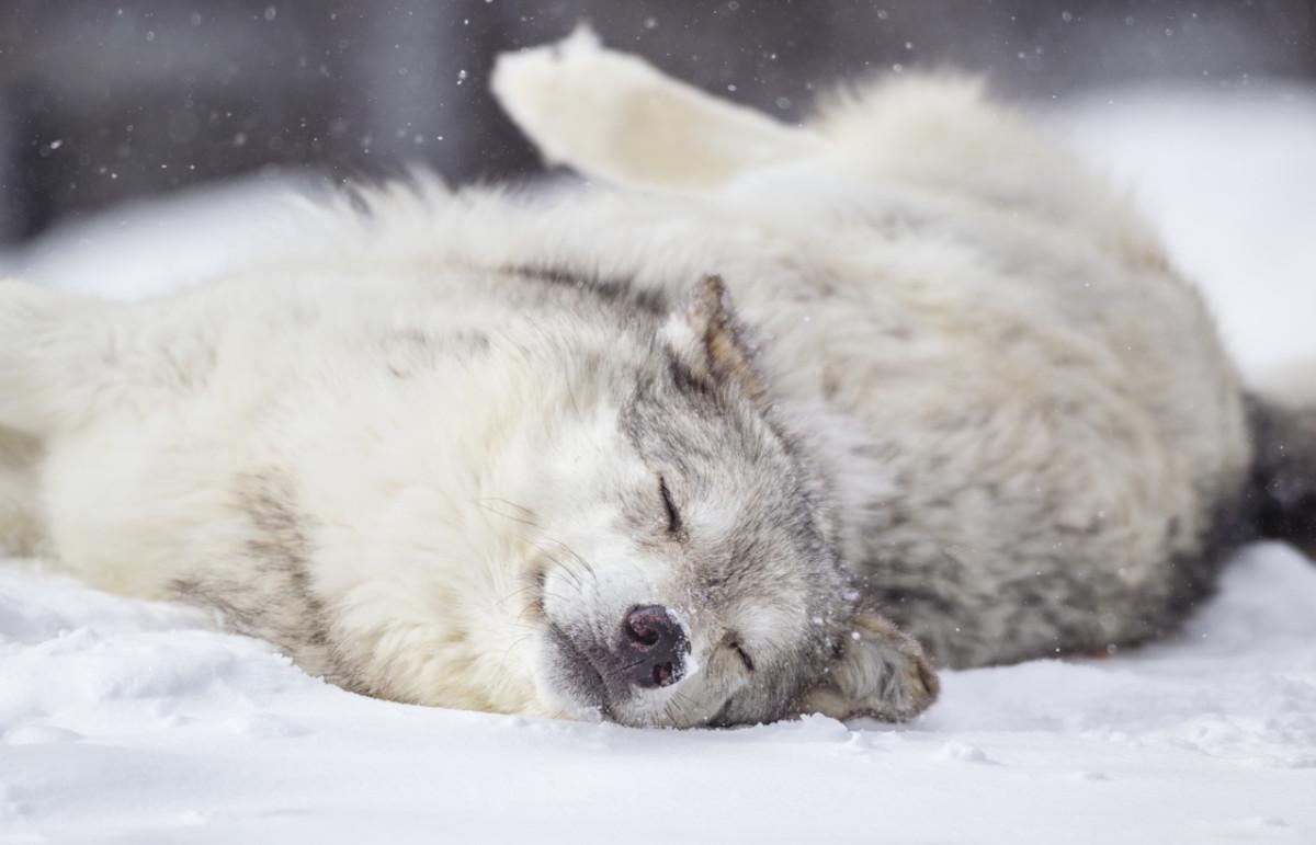 Know Your Sleep Animal