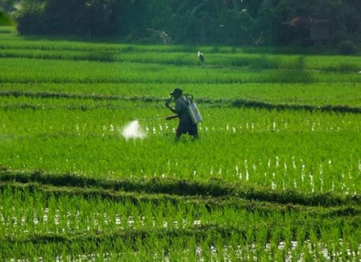 farmerspraying-ccflcr-Pandu-Adnyana
