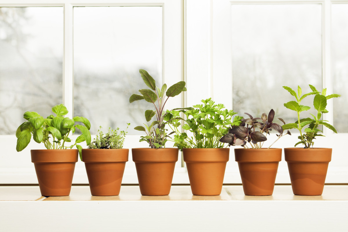 5 Easy Indoor Garden Kits: Green Thumb or Not!