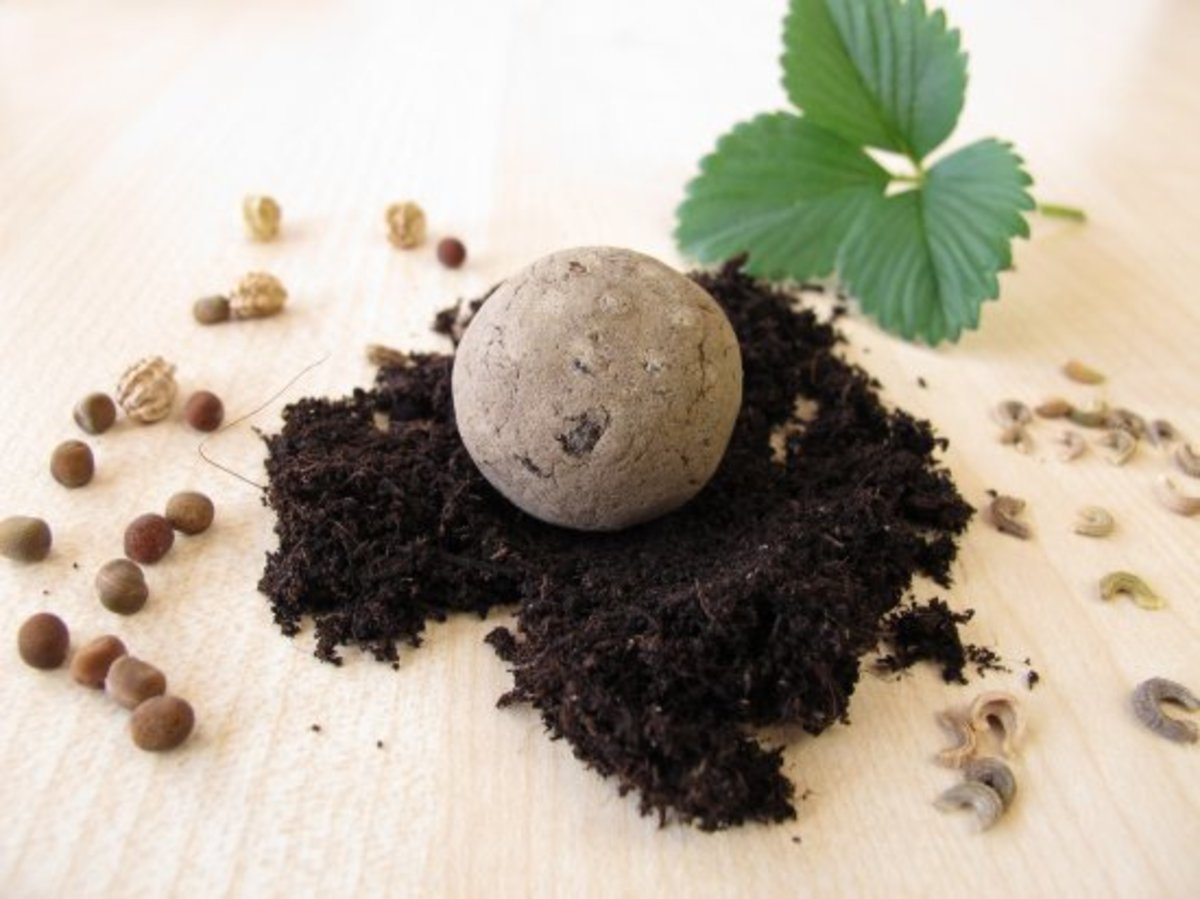 Get Bombed! How To Make a Seed Bomb in 3 Super Easy Steps