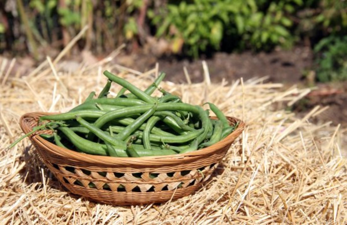 3 Proven And Easy Steps For Sensational Straw Bale Gardening