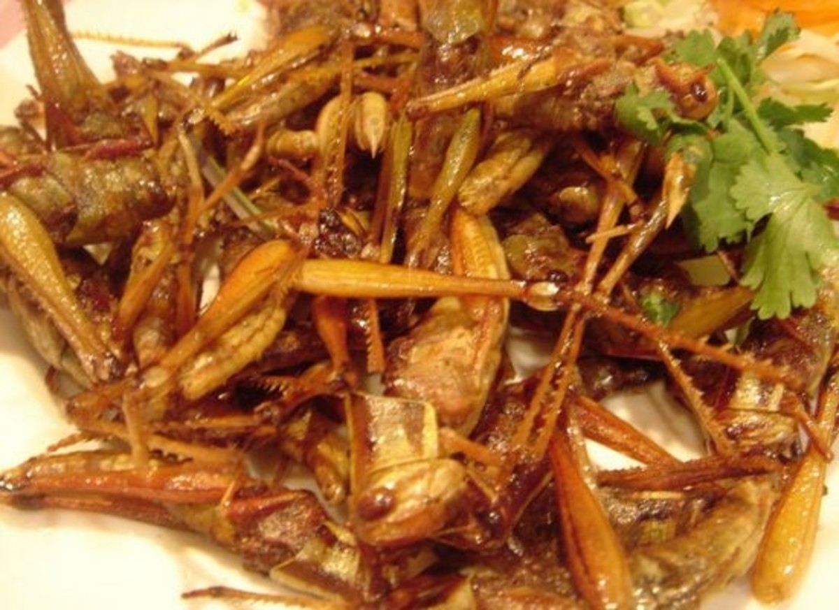 Fried grasshopper