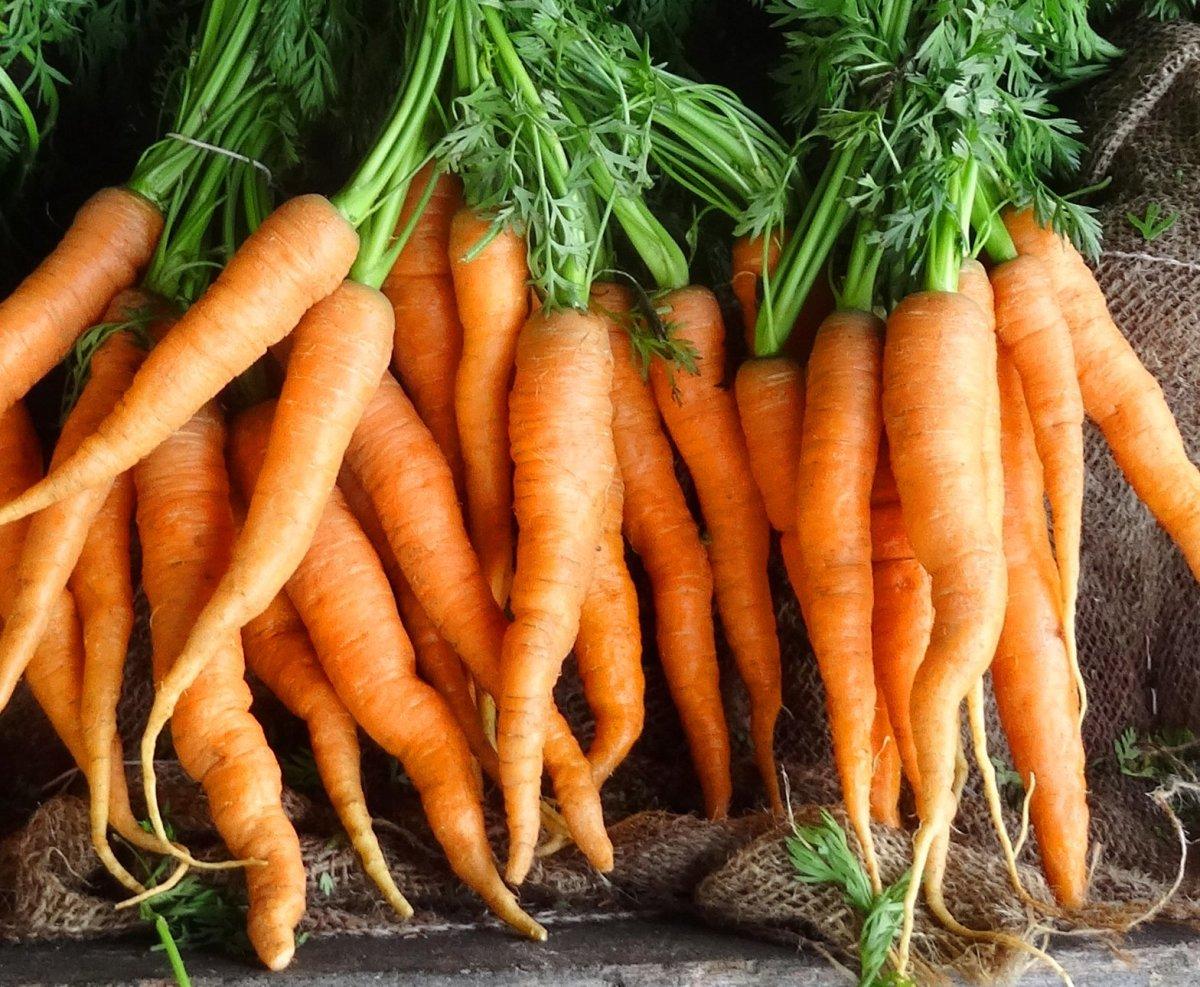 3 Carrot Top Recipes