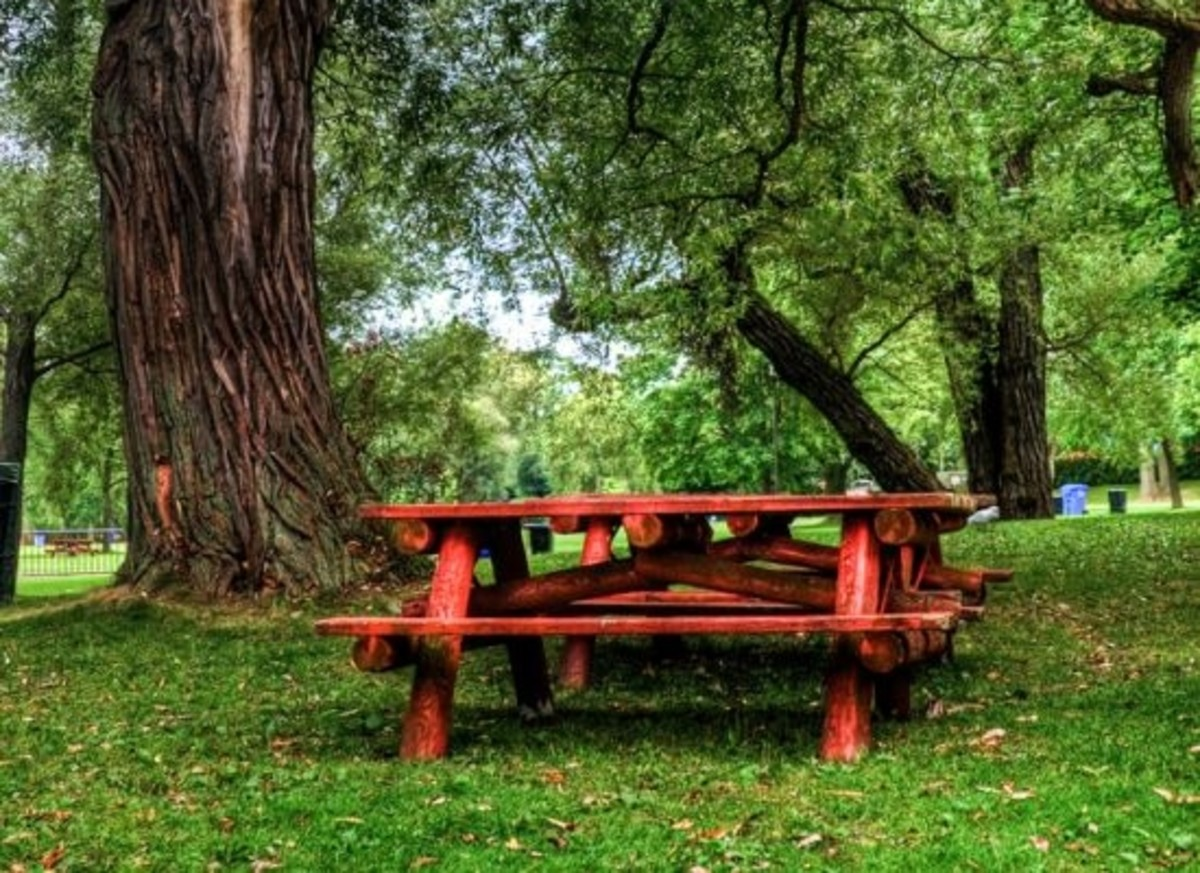 picnic-ccflcr-bensonkua