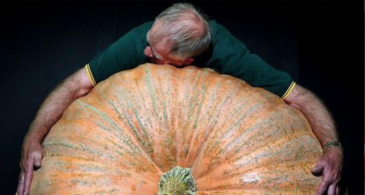 giant-pumpkin-ccflcr-Regular-Weirdo
