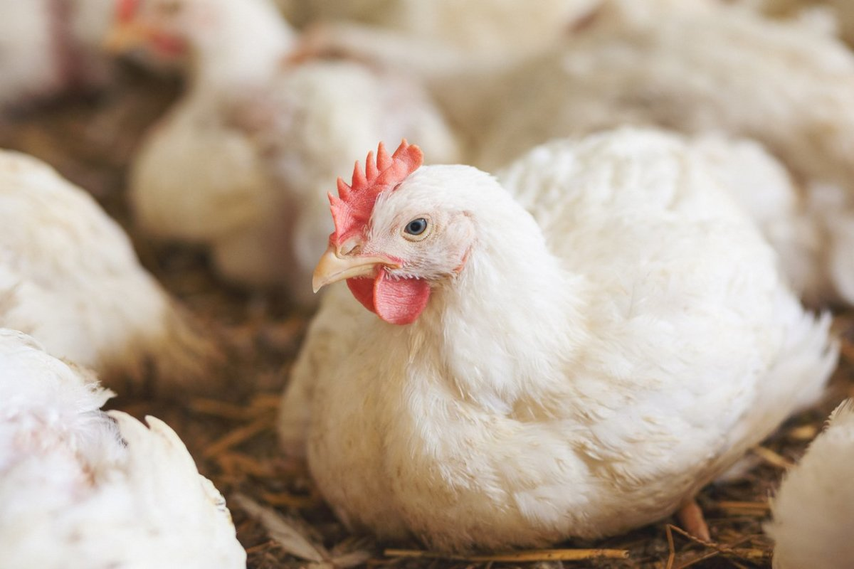 Walmart Sued Over Misleading Marketing on Organic Cage-Free Eggs