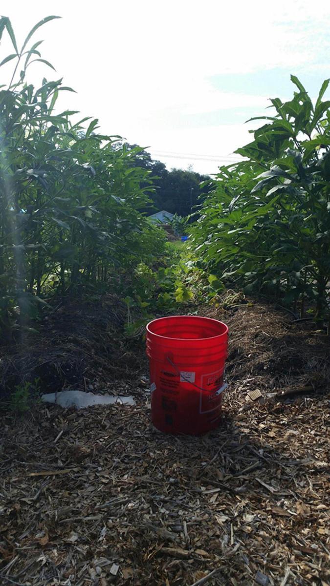 urban farming brings oasis to south carolina food desert