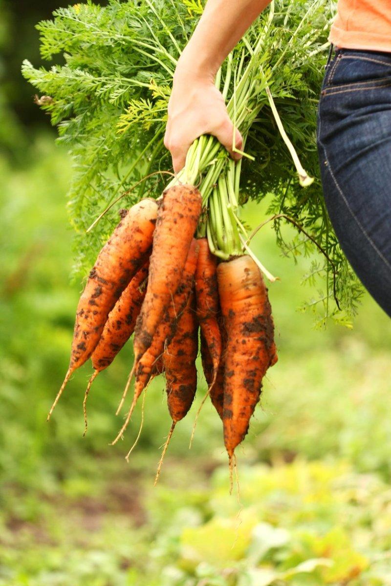 Carrot top recipes