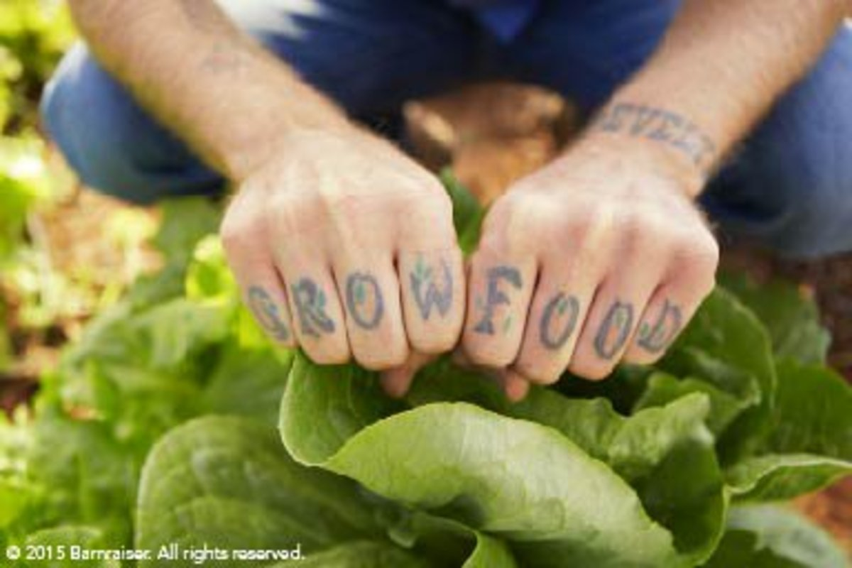 Grow Food Tattoo - Lomax Farm - Barnraiser