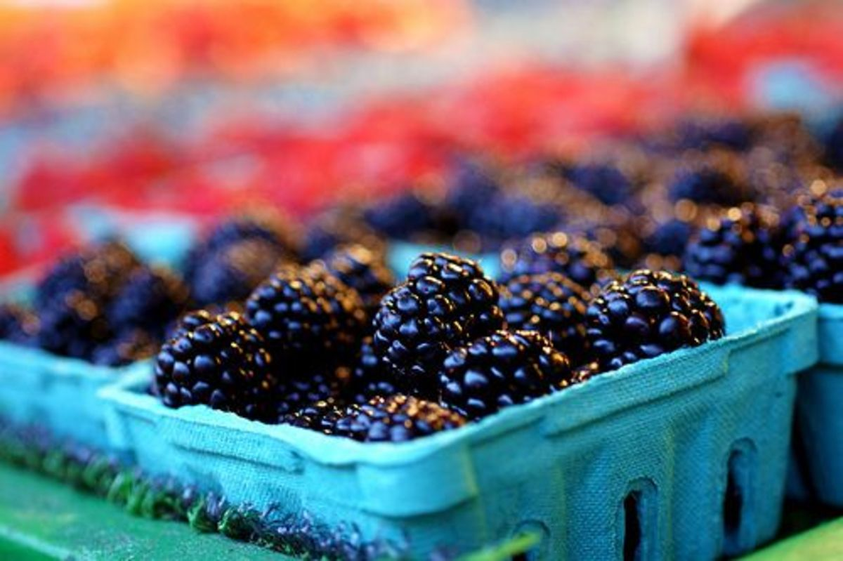 berries-ccflcr-ellie