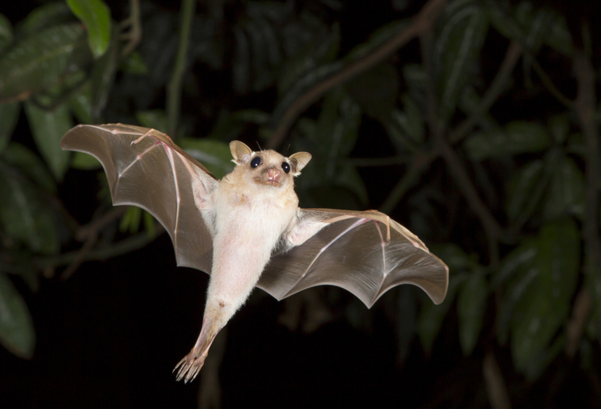 Which Types of Bats are True Superheroes? Pretty Much All of Them, and Here's Why