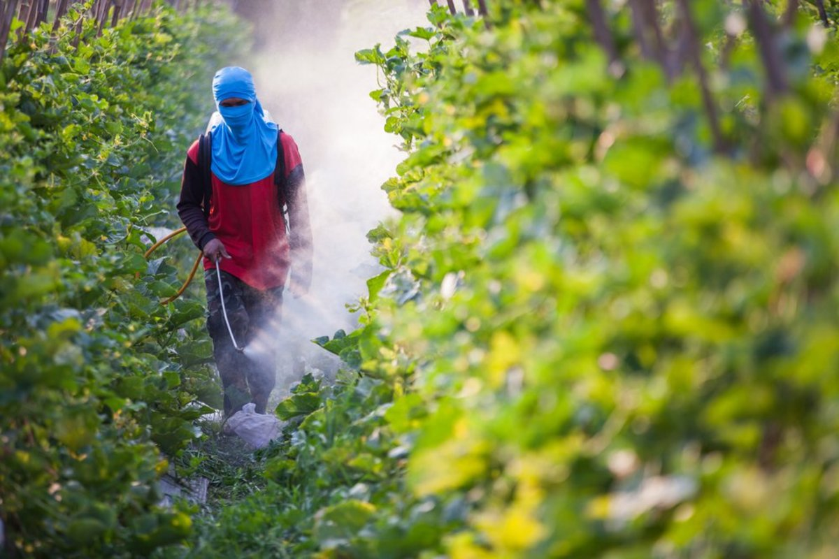 Monsanto Says Its GMO Crops Will Be 'Carbon Neutral' By 2021