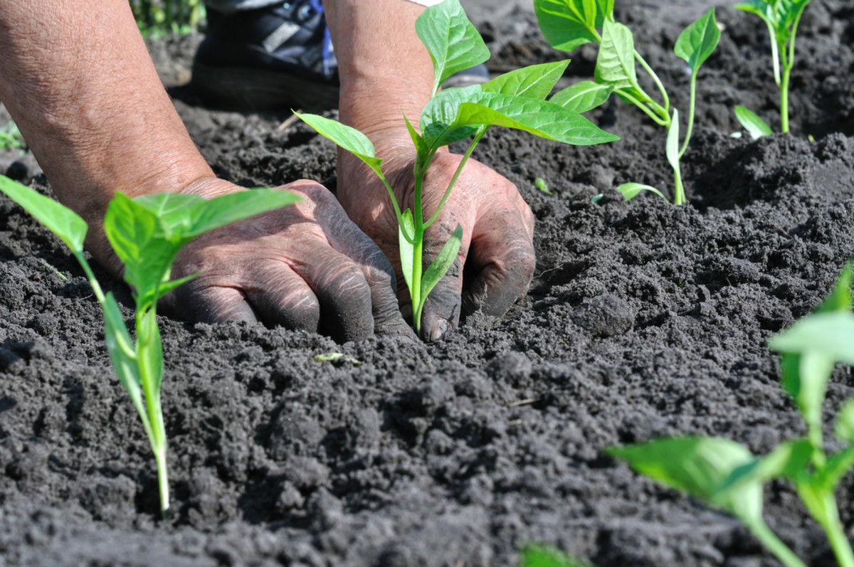 organic agriculture can feed the world