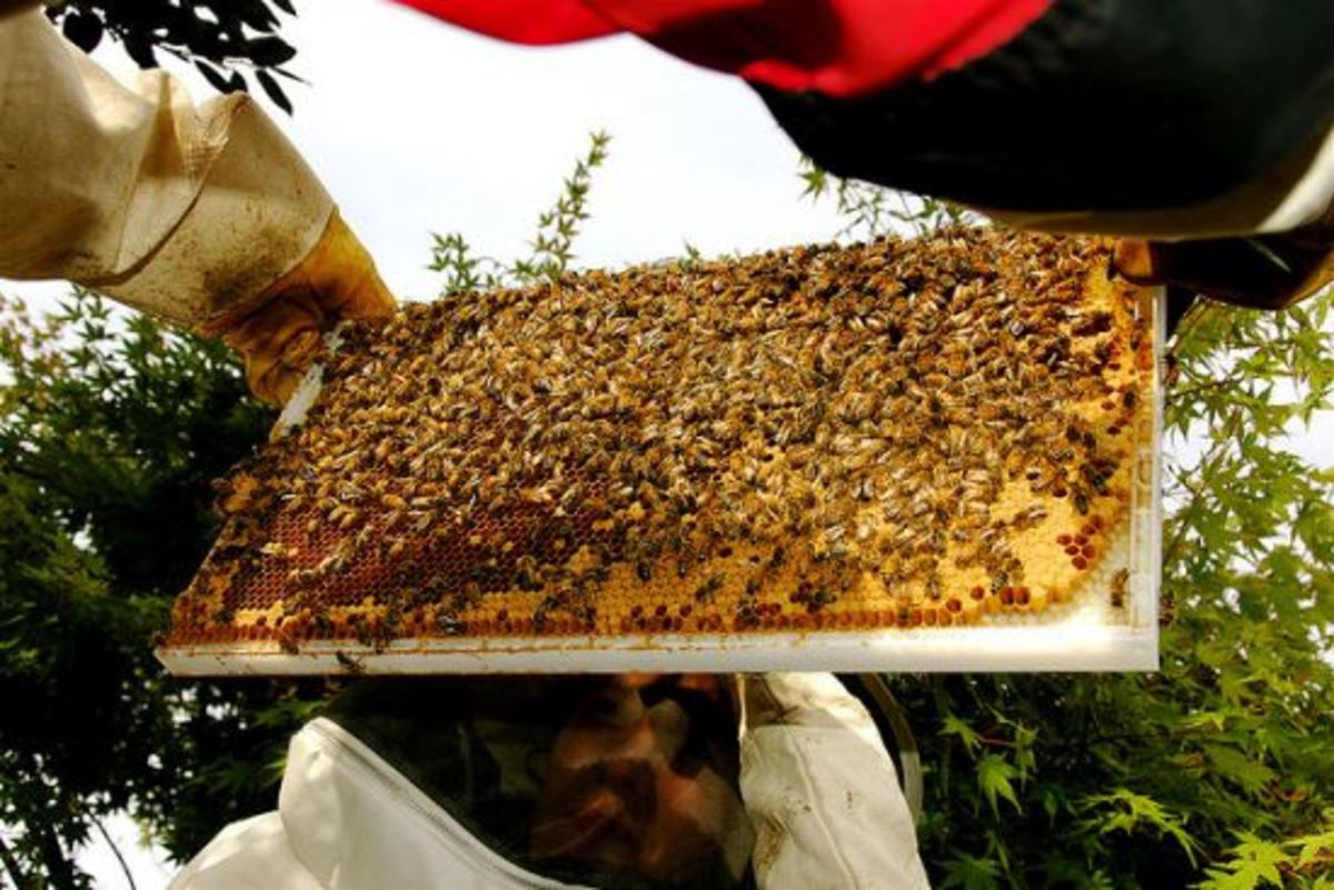 beehive-ccflcr-Don-Hankins