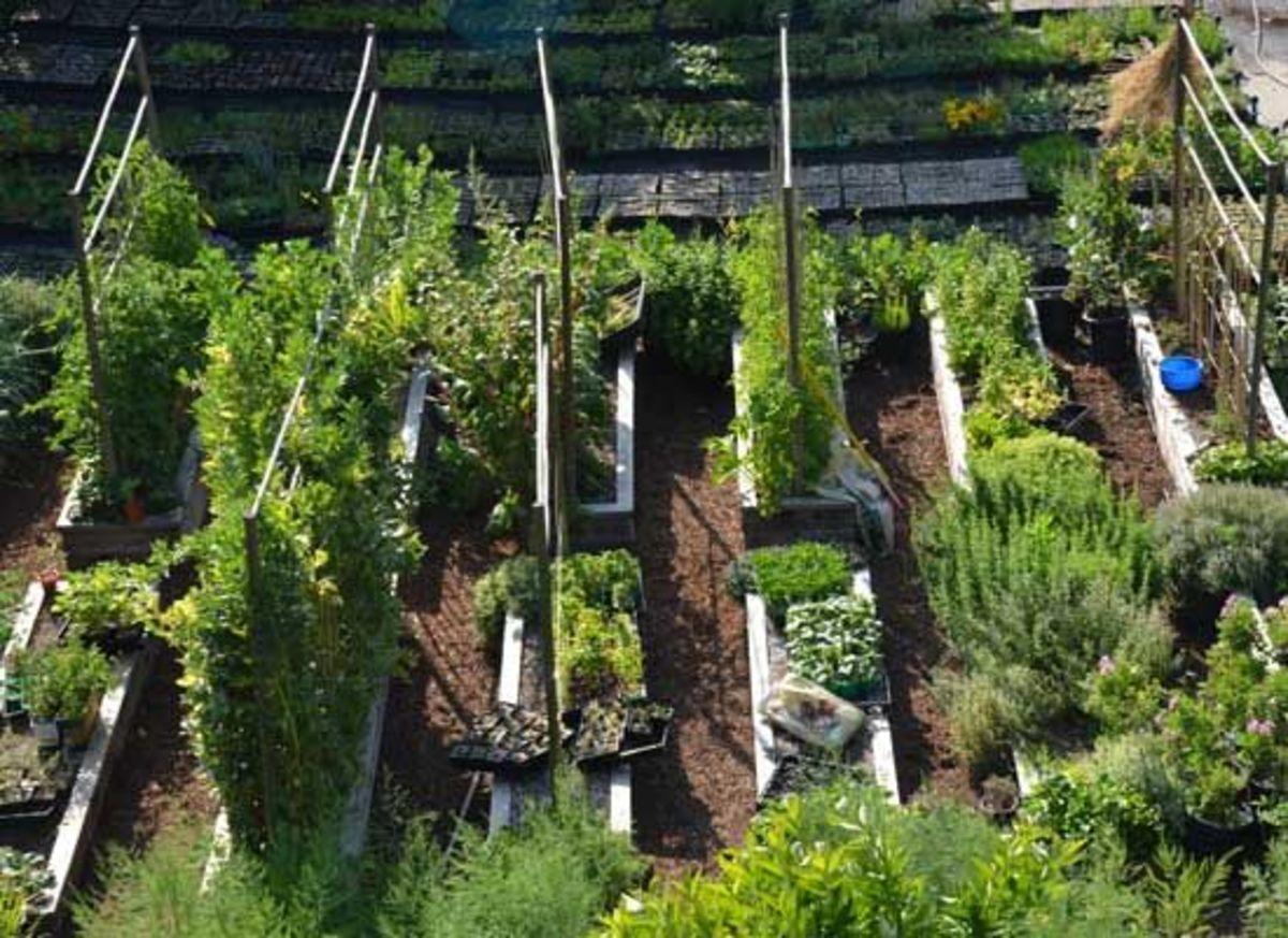 Jimmys garden
