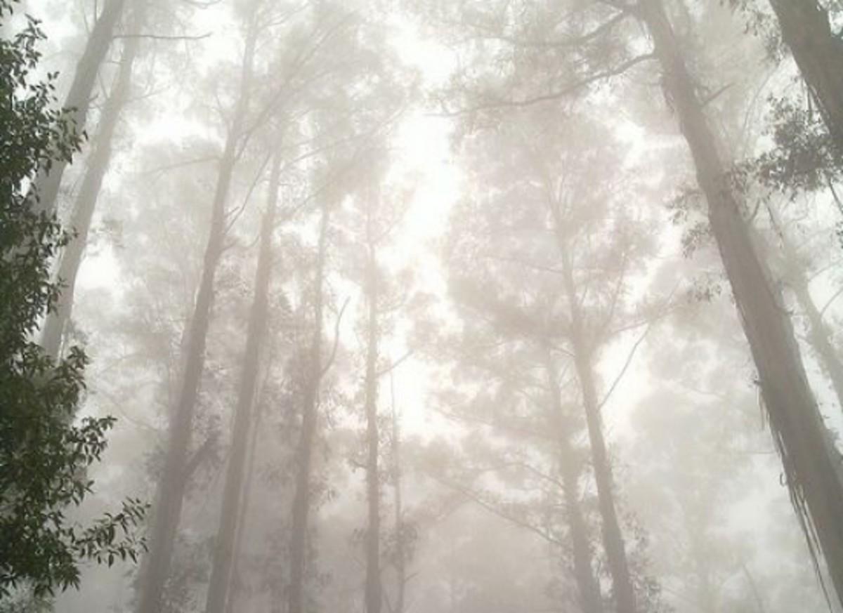 euctrees-ccflcr-chris_samuel