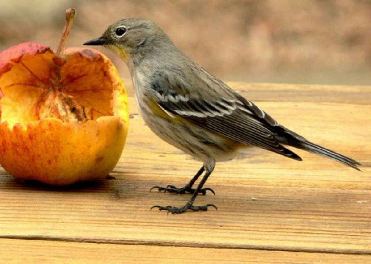 Bird Eating