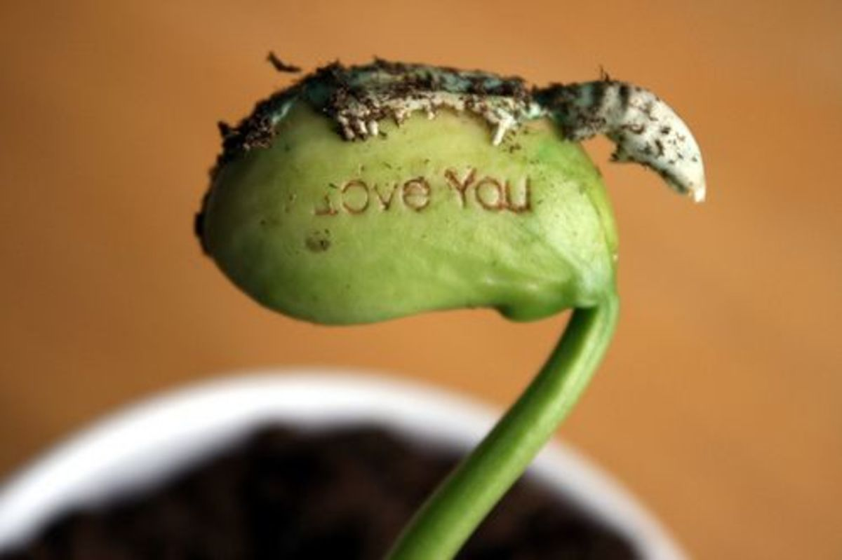 love sprout
