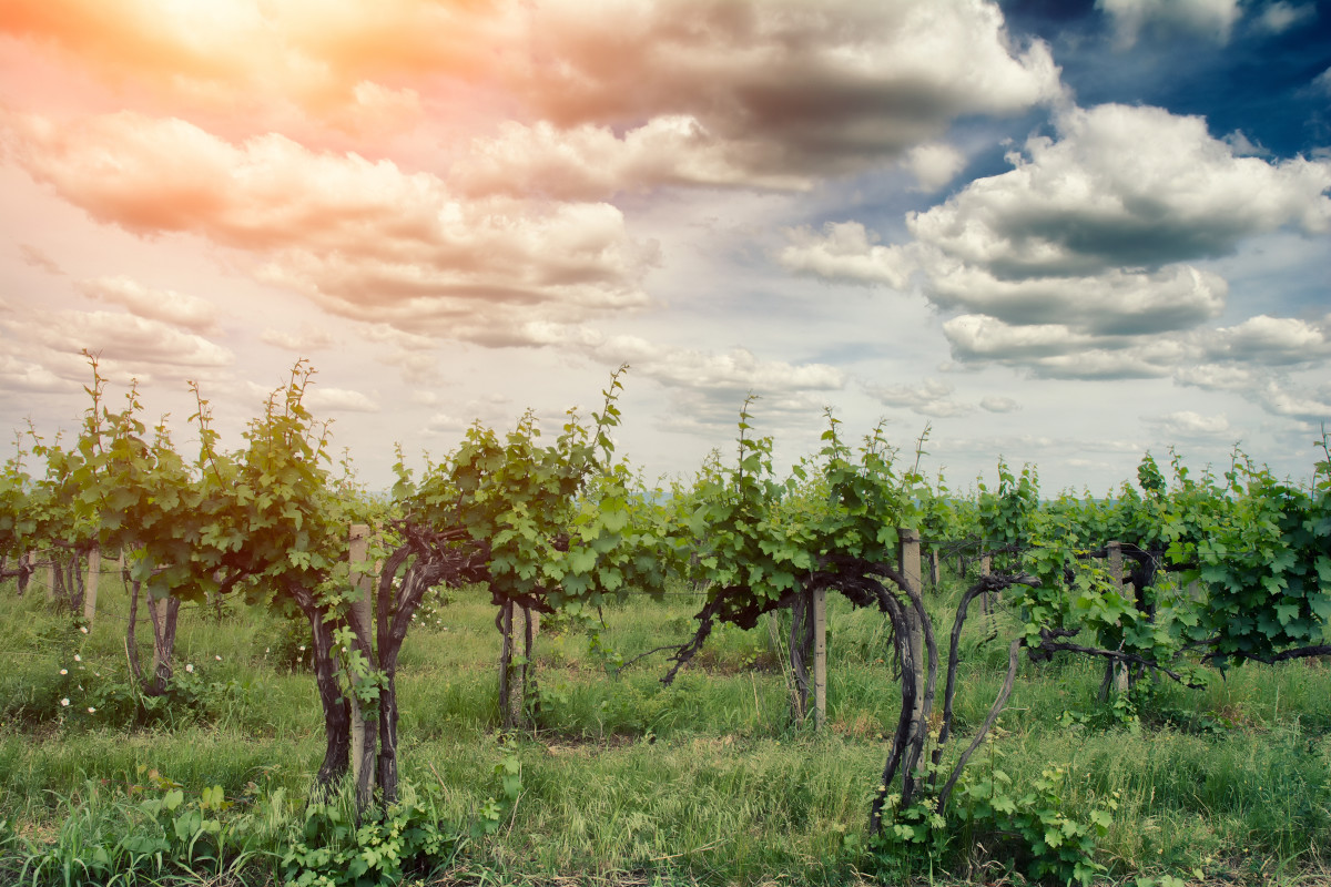 Sustainable wineries are great for many reasons.