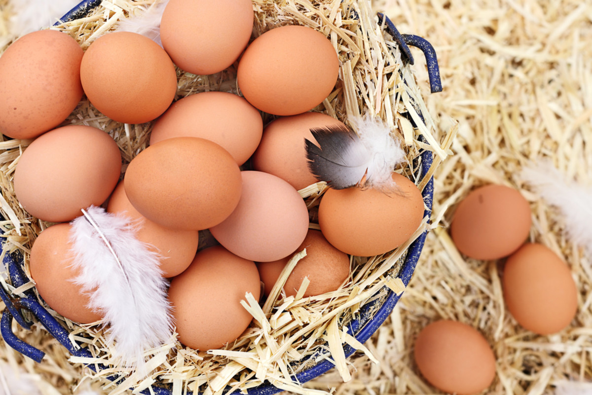 Did Your 'Certified Organic' Eggs Come From an Industrial Farm?
