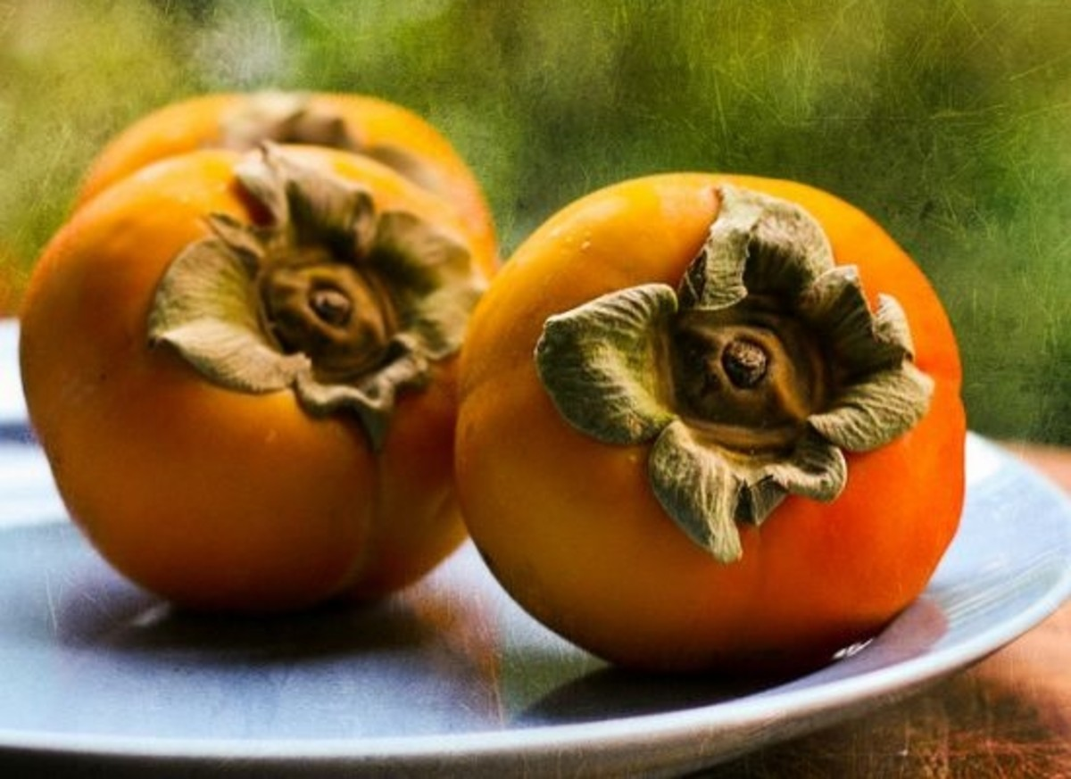 persimmon-ccflcr-mbgrigby