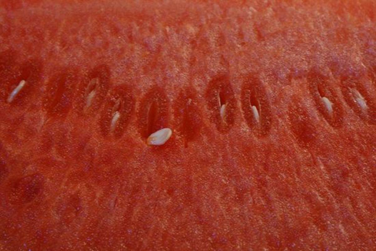 watermelon-ccflcr-ccharmon1