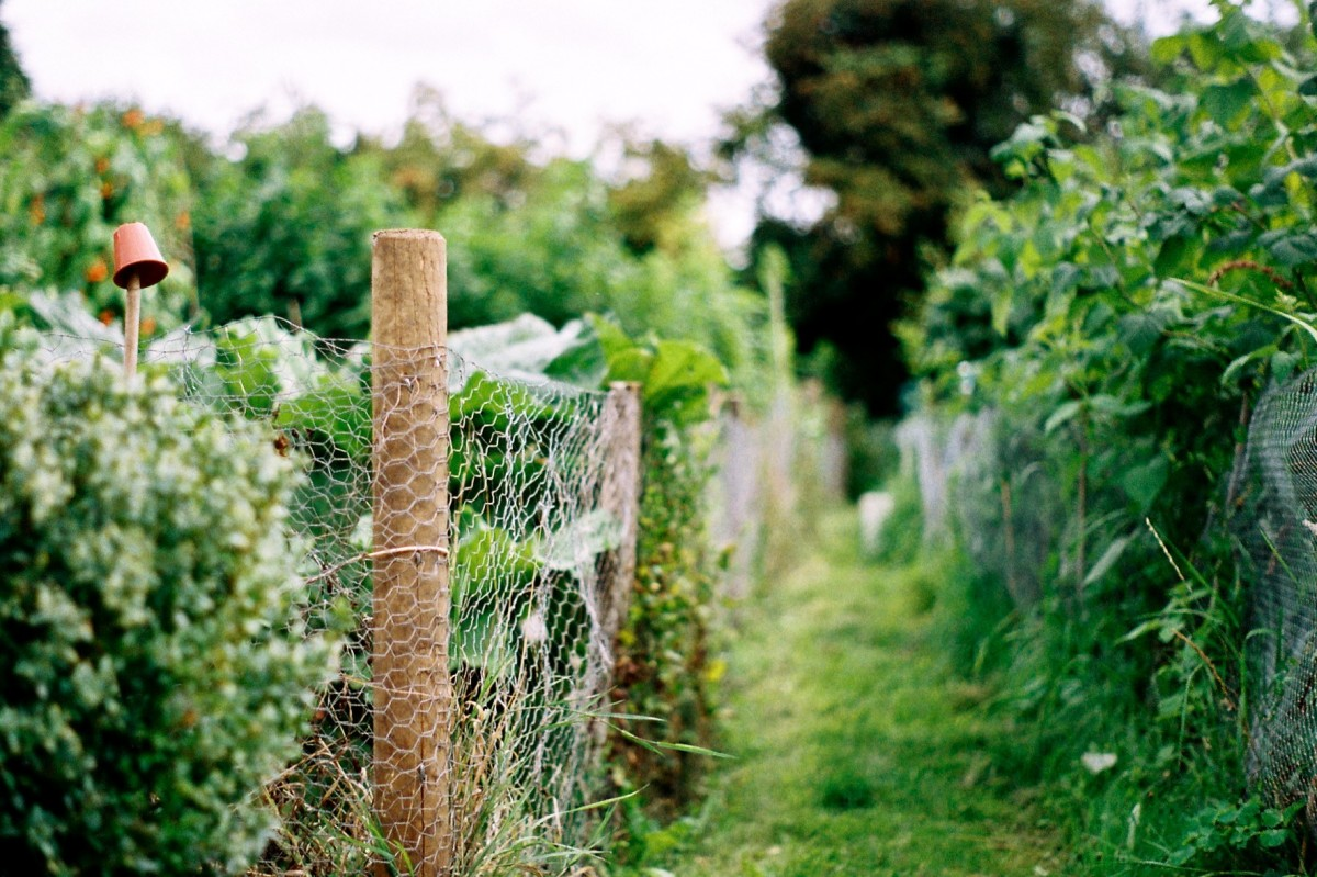 Fencing At