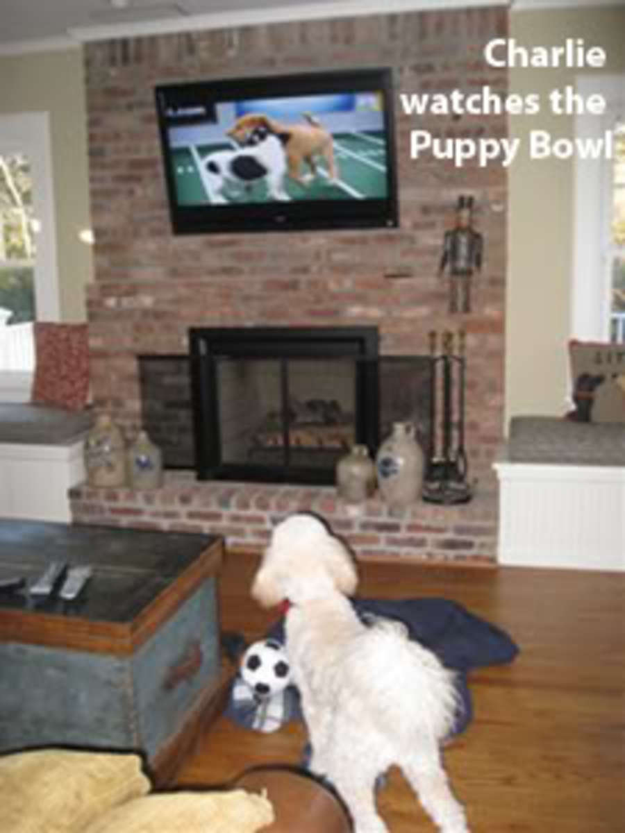 charlie-puppybowl1
