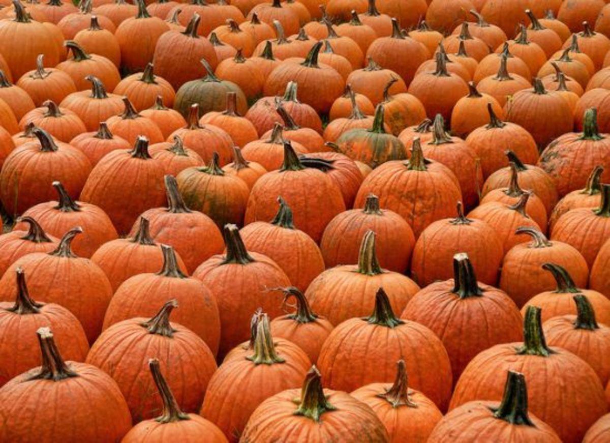 pumpkin-ccflcr-Muffet