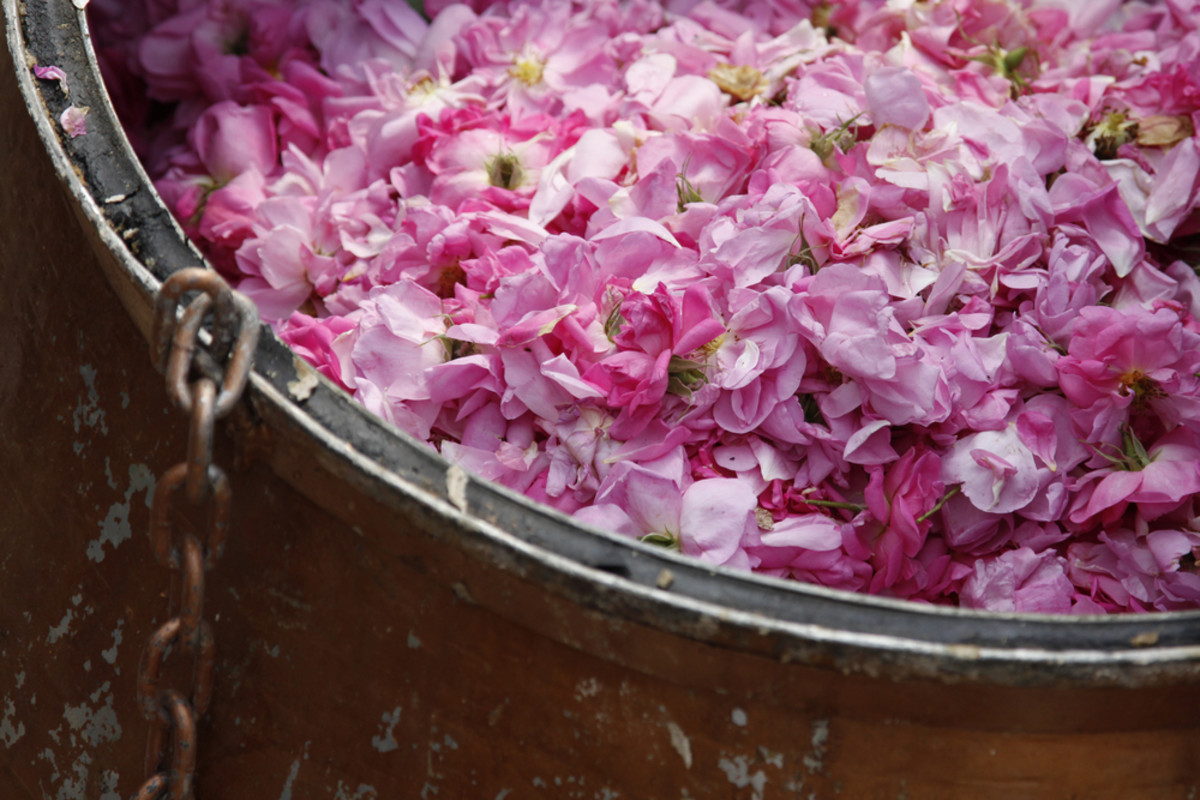 6 Benefits Of Rose Water The Must Have Summertime Skin Fixer