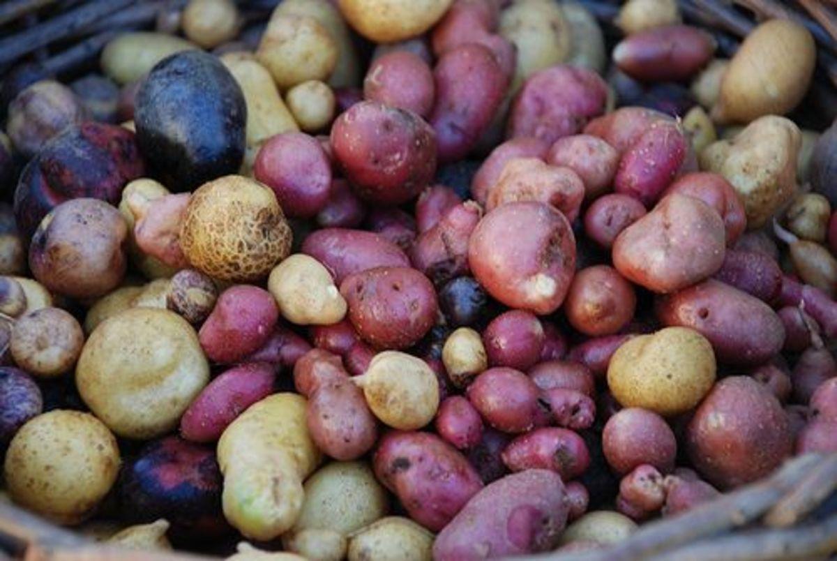 potatoes-ccflcr-kthread