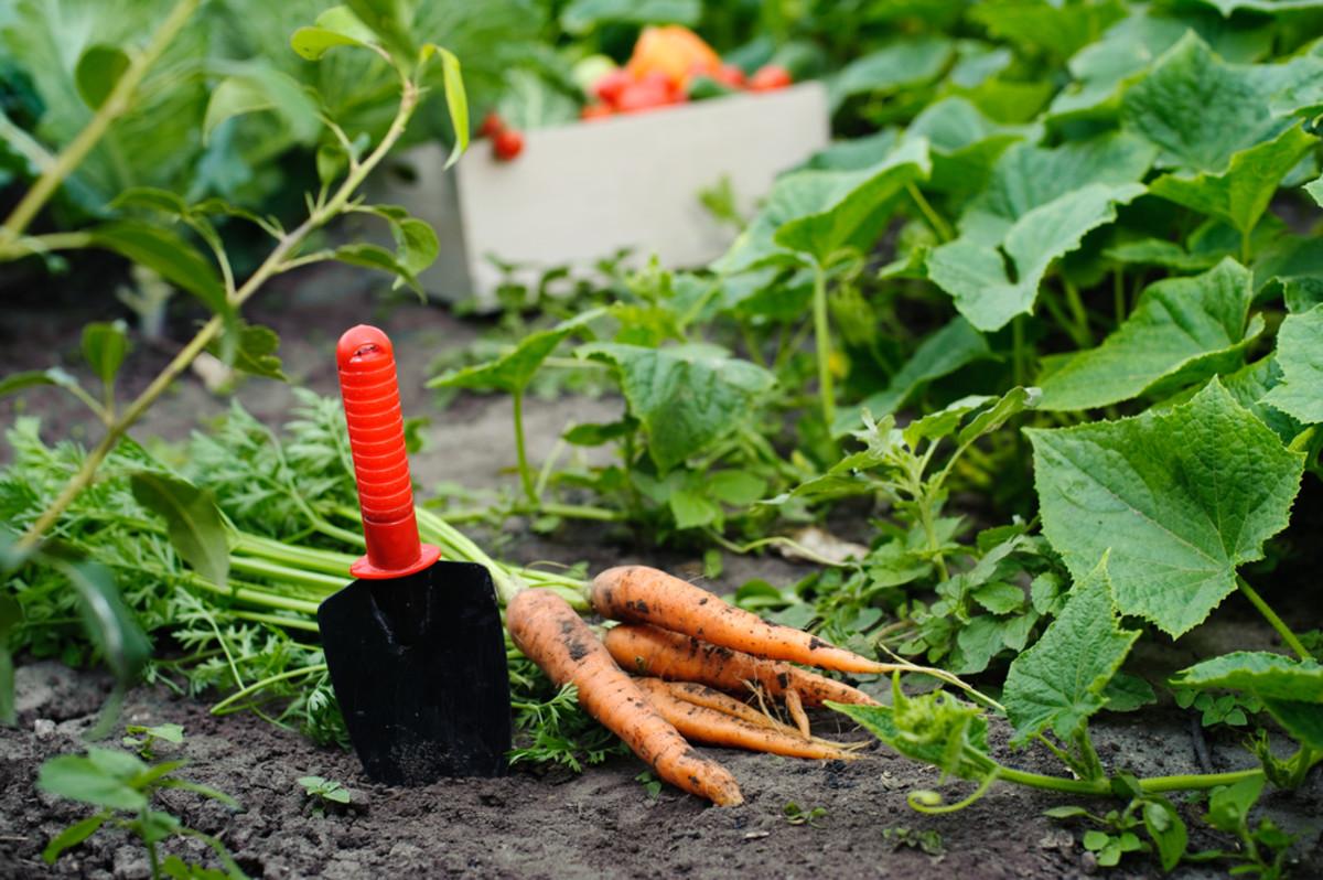 Veganic Farming: Can it Save the Vegan Diet from Animal-Based Soil?