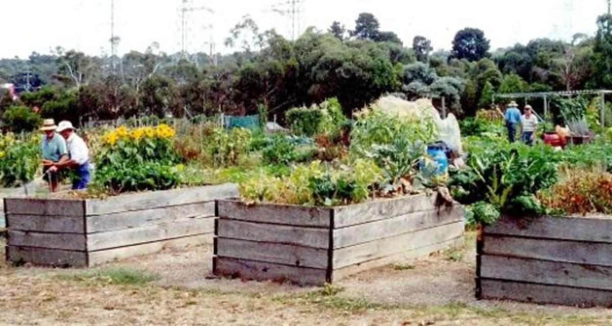 Building community with a community garden.