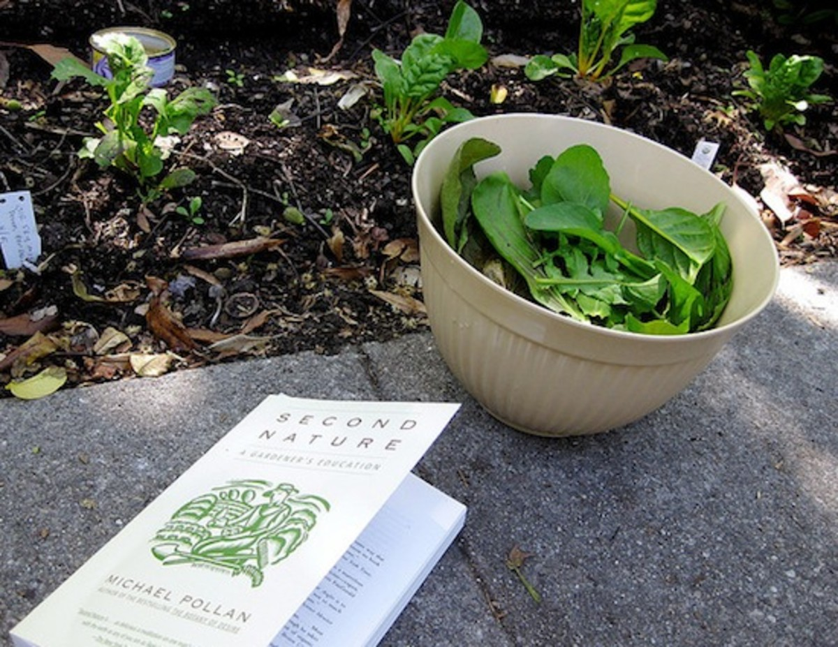 The 7 Best Gardening Books to Give A Gardener for Christmas